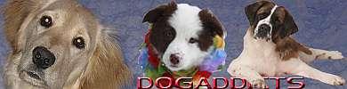 dogaddicts